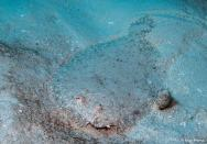 photo-plongee-cozumel