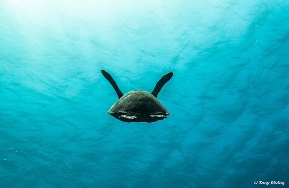 Cours de plongée roatan