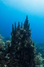 photo-plongee-roatan-recif-reef
