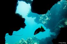 photo-plongee-roatan-blue-channel