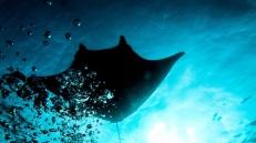 photo-plongee-raja-ampat