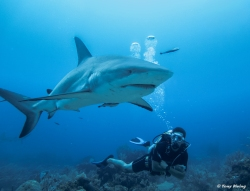 7 Djé shark.jpg
