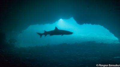 plongee-malapascua-shark-cave-gato-island