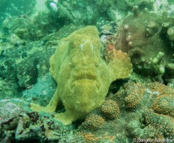 04 Frogfish - painted-min