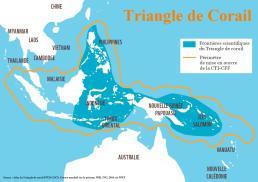 komodo-triangle-de-corail-indonesie