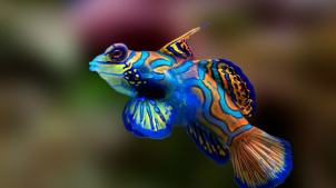 poisson-mandarin