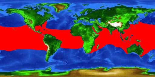carte-zone-requin-baleine