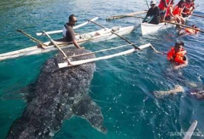 requin-baleine-oslob-philippines