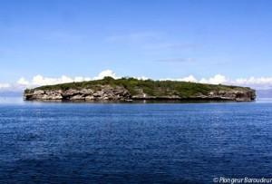 pescado- island-Moalboal-philippines