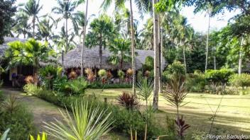 logement-donsol-philippines-woodland