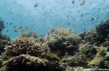 Reef Panglao 1-min