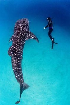 requin-baleine-mois-4-min
