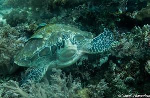 turtle - green-min