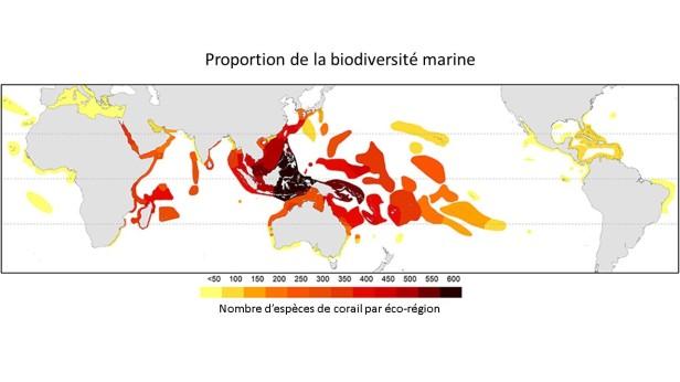 biodiversite-marine-mondiale