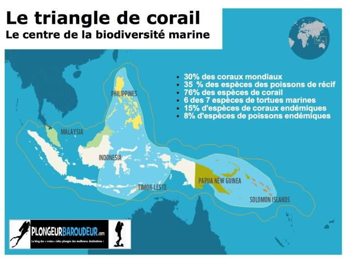 le triangle de corail plongeur baroudeur-min
