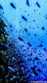 25Mix fish - everywhere vertical (Bira)-min