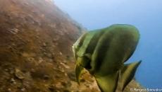plongee Similan 16