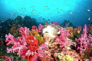 Richelieu-rock-corail-moue-min