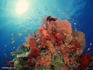 Richelieu-rock-corail-moue2-min