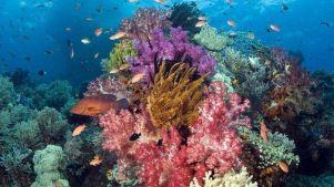Richelieu-rock-corail-moue3-min