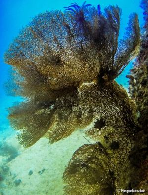 photo-plongee-raja-ampat-8