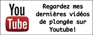 logo like ma YT sur article