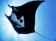 black manta 3