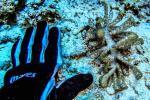 photo-plongee-Wakatobi-philippines