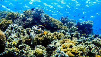 photo-plongee-Wakatobi-philippines