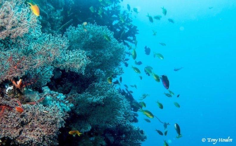 Faire de la plongée au philippines