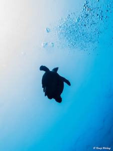 Turtle - Green turtle going up-min