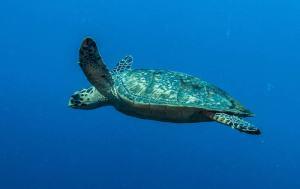 Turtle - Hawksbill 0520-min
