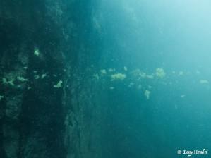 barracuda-lake-13-thermocline-min