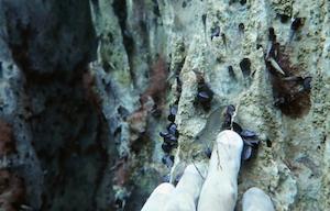 barracuda-lake-16-crevette